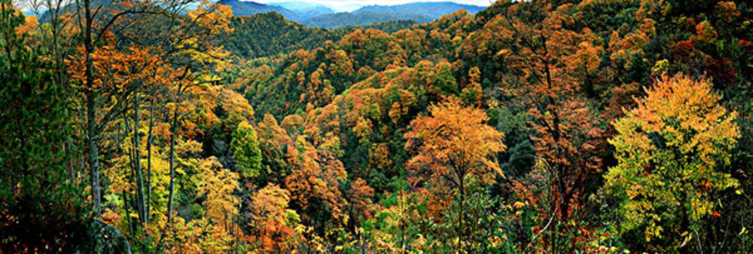 益寿山森林公园.jpg